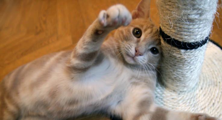 katte duft