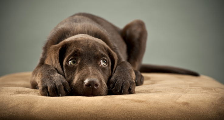 hunde sygdomme