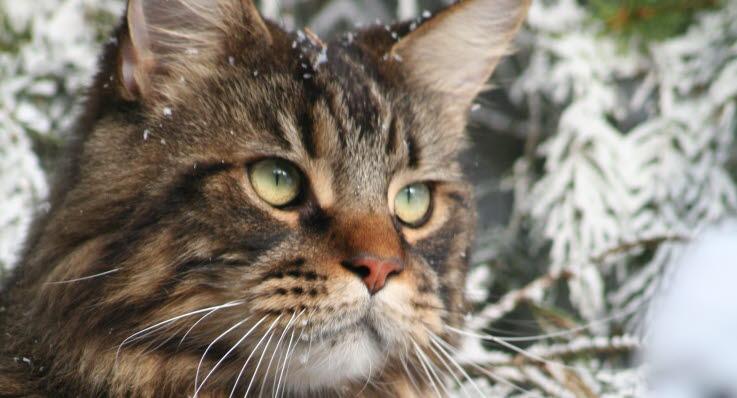 Hvor gammel er din kat? - Agria Dyreforsikring