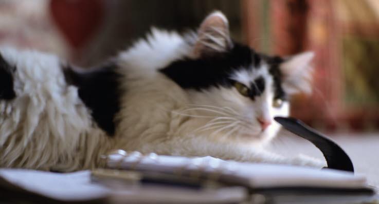 p piller til katte