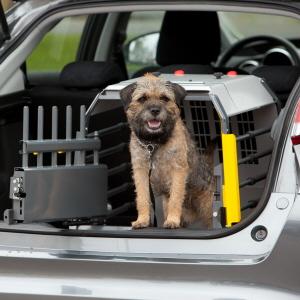 Opkast og diarré hos hund - Agria Dyreforsikring