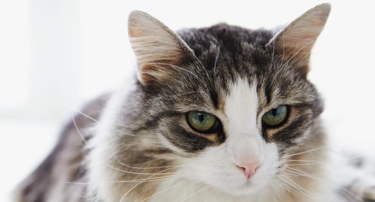 adfærd hos katte
