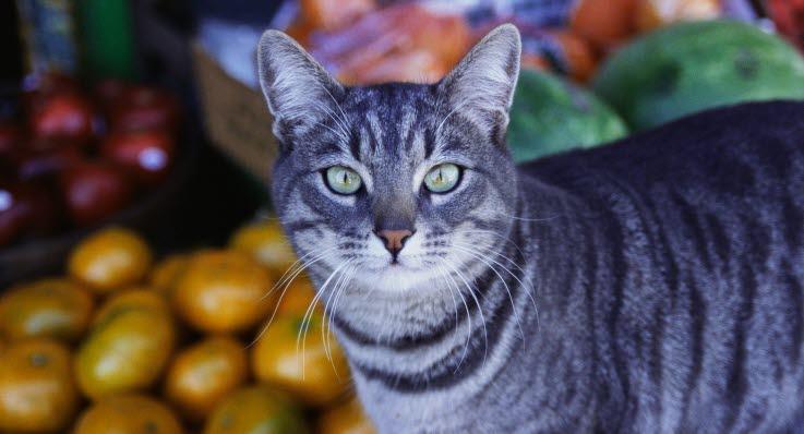 hvad må katte ikke få at spise