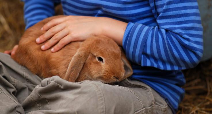kanin vil ikke spise