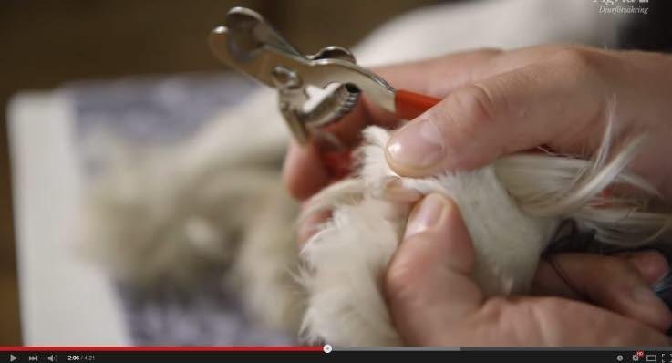 dyrlæge klippe negle pris