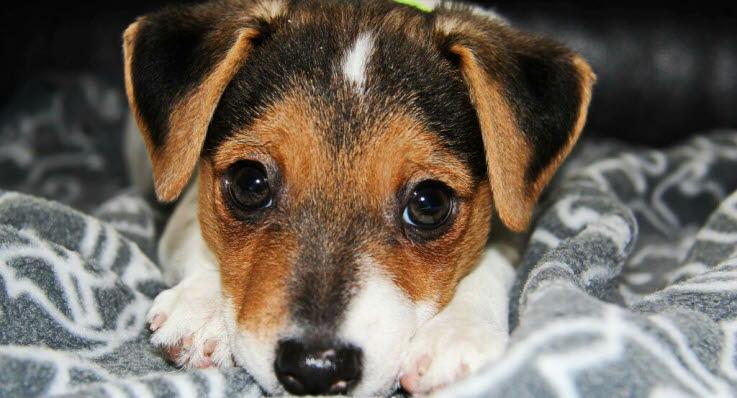 hund ondt i maven symptomer