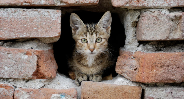 hvorfor har katte knurhår