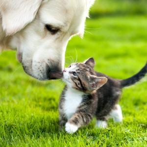 Forsikring hund dnb