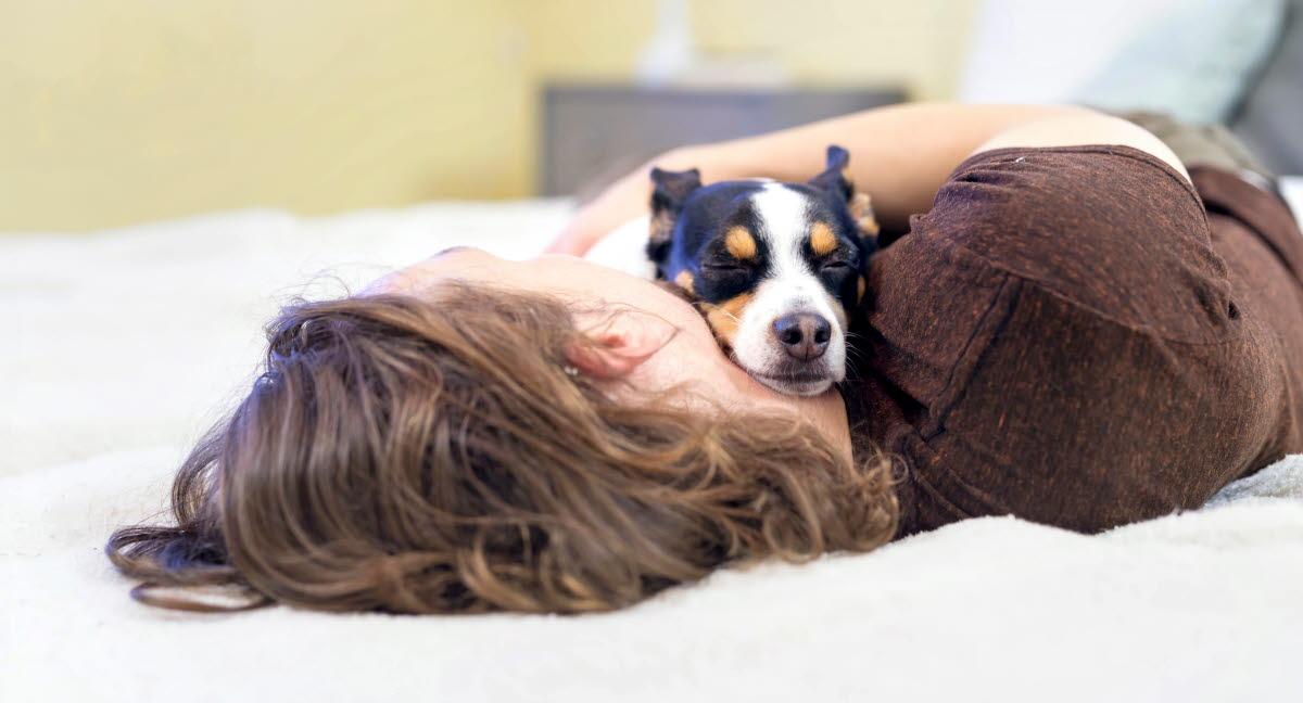 kastrering av hund juridisk
