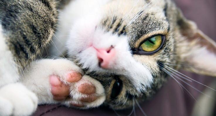 Hvor ofte skal katten vaccineres og hvordan dækker forsikringen? - Agria Dyreforsikring